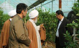 آیت الله معلمی با حضور در روستای خرماکلا از پرورش گلخانه ای لیمو ترش در این منطقه بازدید میدانی به عمل آوردند + تصاویر